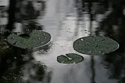 Droplets Originals - Bayou lilypads by Fran Wolok