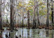 Louisiana Swamp Prints - Bayou Magic Print by Carol Groenen