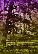 Bayou Twilight Print by Judi Bagwell