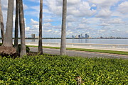 Tampa Skyline Prints - Bayshore through Palms Print by Carol Groenen