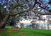 Fairhope Framed Prints - Bayview Swing Under the Tree Framed Print by Michael Thomas