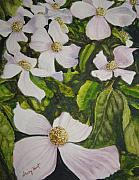 Tree Blossoms Paintings - BC Dogwoods by Shirley Braithwaite Hunt