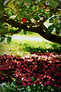 Apple Photos - Be Fruitful II by Linda Mishler