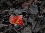 Autumn Leaves Acrylic Prints - Be The One Acrylic Print by Odd Jeppesen