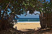 North Shore Prints - Beach Access Pupukea Print by Paul Topp