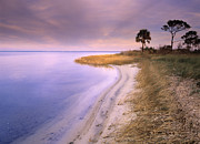 Saint Joseph Metal Prints - Beach Along Saint Josephs Bay Florida Metal Print by Tim Fitzharris