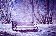 Infrared Photos - Beach Bench by Scott Norris