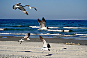 Wet Fly Prints - Beach Birds in Play Print by Nicole Hutchison