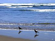 Crows Photo Posters - Beach Buddies Poster by Will Borden