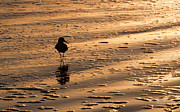 Shore Birds Photos - Beach Buffet by Melissa Wyatt