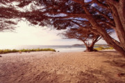 Under The Ocean Prints - Beach Covered with Trees Print by George Oze