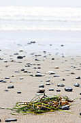 Pebbles Photos - Beach detail on Pacific ocean coast of Canada by Elena Elisseeva