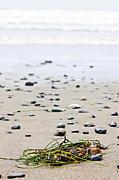 Beach Detail On Pacific Ocean Coast Of Canada Print by Elena Elisseeva