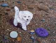 Laura Iverson - Beach Discoveries
