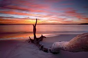 Tasmanian Posters - Beach Driftwood At Sunset Poster by Robbie Shone