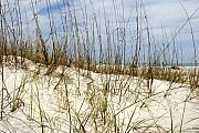 Sea Oats Framed Prints - Beach Dunes Framed Print by David Lee Thompson