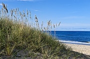 Atlantic Beaches Framed Prints - Beach dunes. Framed Print by John Greim