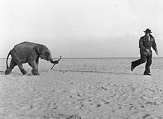 Mature Men Posters - Beach Elephant Poster by John Drysdale
