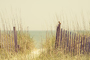 Myrtle Green Prints - Beach Fence in Grassy Dune South Carolina Print by Stephanie McDowell
