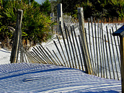 Saw Palmetto Photos - Beach Fence by Judy Wanamaker