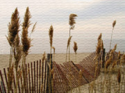 Beach Fence Posters - Beach Fence Poster by Karol  Livote