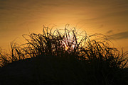 Hatteras Island Photos - Beach Grass At Sunrise by Steven Ainsworth
