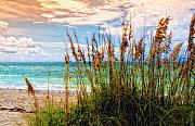 Seaside Florida Framed Prints - Beach Grass II Framed Print by Gina Cormier