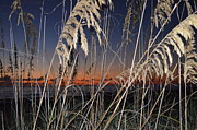 Susan Mcnamara Metal Prints - Beach grass Metal Print by Susan McNamara