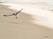 Flying Seagull Originals - Beach Landing by Karen Devonne Douglas