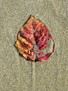 Beach Leaf Print by Pamela Turner