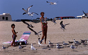 Feeding Birds Prints - Beach Life Print by Skip Willits
