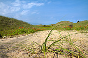 Blue Sky And Sand Posters - Beach Path Poster by Betsy A Cutler East Coast Barrier Islands