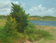 Cape Cod Paintings - Beach Pines by Phyllis Tarlow