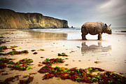 Rhinoceros Art - Beach Rhino by Carlos Caetano