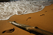 Kauai Island Posters - Beach Surf Footprints on Kauai Hawaii Poster by ELITE IMAGE photography By Chad McDermott