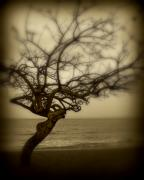 Oceanscape Prints - Beach Tree Print by Perry Webster