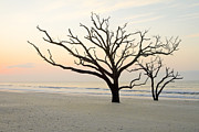 Bone Yard Posters - Beach Trees at Botany Bay South Carolina Poster by Bill Swindaman