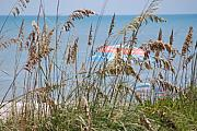 Sea Oats Framed Prints - Beach Umbrella Framed Print by Peter  McIntosh