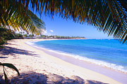 Puerto Rico Photo Posters - Beach View Under a Palm Tree Poster by George Oze