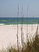 Beach View With Grass Print by James Granberry