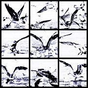 Bird Collage Prints - Beachcoma Print by Andrew Paranavitana