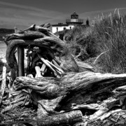 Tree Stump Photos - Beached Tree Stump by David Patterson