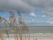 Seaoats. Sea Oats Framed Prints - Beachview with Seaoat  Framed Print by Christiane Schulze