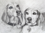 Pencil Drawing Framed Prints - Beagle Boys Framed Print by Susan A Becker