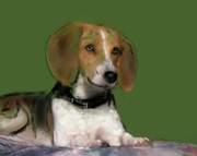Puppy Mixed Media - Beagle by Donna Johnson