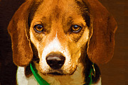 Sports Digital Art Metal Prints - Beagle Hound Dog in Oil Metal Print by Kathy Clark