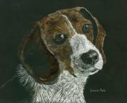 Puppy Mixed Media - Beagle Portrait by Jessica Kale