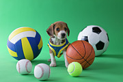 Sports Clothing Framed Prints - Beagle Puppy And Sports Framed Print by Mixa