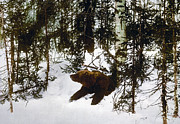 Hibernation Prints - Bear coming out of his den Print by International  Images