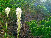 Montana Digital Art - Bear Grass along Highline Trail in Glacier NP by Ruth Hager